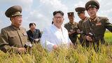 Ким Чен Ын предпочел картофельную ферму встрече с Помпео