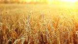 Приднестровские аграрии обменялись опытом с коллегами из Молдовы и Украины