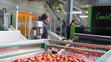 Более 90% экспорта молдавских яблок пришлось на рынок России