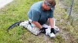 Житель Флориды спас аллигатора с помощью швабры и скотча