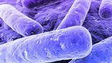 Ученые взломали сенсорную систему бактерий