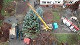 Житель Кишинева возмущен тем, что елку для площади срубили в его дворе