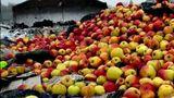 В России уничтожили 18 тонн молдавских яблок из-за отсутствия документов