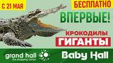 Grand Hall: Впервые в Молдове крокодилы-гиганты: вход свободный ®