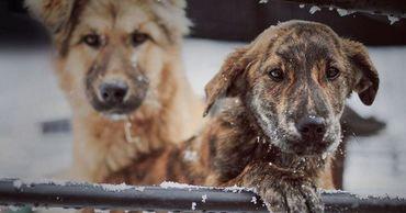 В Центре отлова и стерилизации бездомных животных находятся около 870 собак.