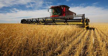 В Приднестровье убрано зерновых втрое меньше прошлогоднего. Фото: nm45.ru.