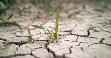 Засуха наложила свой отпечаток на сельскохозяйственные культуры.