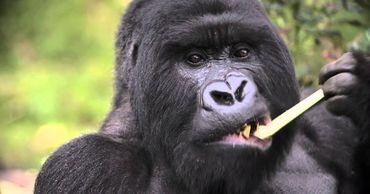 Ученые назвали диких животных, которые рискуют заболеть COVID-19.