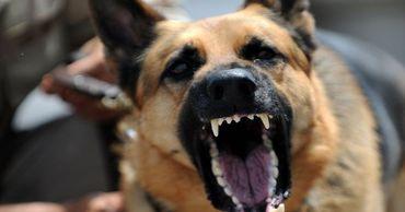 Жительницу столицы покусали несколько бродячих собак.