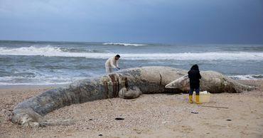 Погибло множество морских животных. На берег выбросило 10-метрового молодого кита.