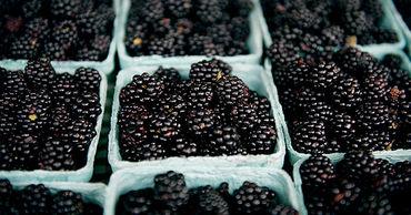 В Молдове урожай ранней ежевики будет в полтора-два раза ниже прошлогоднего.