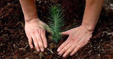 В селе Копчак будет посажено 15 гектаров лесонасаждений.