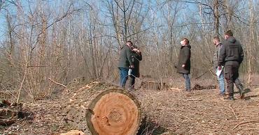 Открыто уголовное дело по факту незаконной вырубки в Днестровском парке