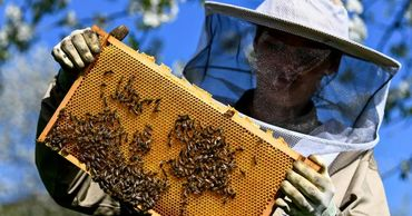 ЕС запретил пестицид компании Bayer из-за его вреда пчелам.