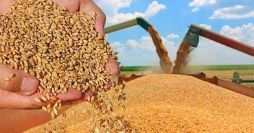 Ограничения на экспорт зерна применяются выборочно.