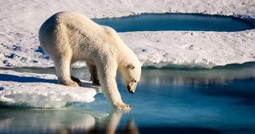 Ученые спрогнозировали полное исчезновение льдов в Арктике к 2050 году.