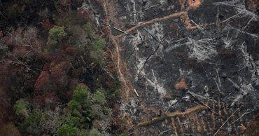 Леса Амазонии поглощают теперь меньше углекислого газа, чем выделяют.
