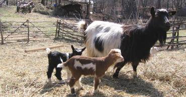 Жители сел продают и забивают домашних животных, так как их нечем кормить.