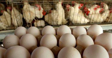 Молдавские яйца и мясо птицы не попадут на рынок ЕС в этом году.