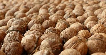Предприниматели организовали контрабанду ядра ореха в ЕС и РФ.