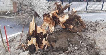 В столице сильный ветер повалил дерево на жилой дом.