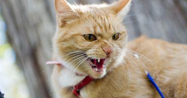 ANSA: В Молдове обнаружено бешенство у кошки.