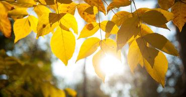 6 ноября в Молдове ожидается переменная облачность. Ветер юго-западный, слабый до умеренного.