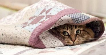 Эксперты назвали оптимальную для здоровья температуру в доме.