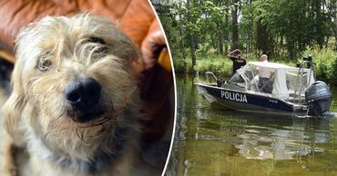В Польше собака три дня охраняла хозяина, провалившегося в болото. Фото: Point.md.