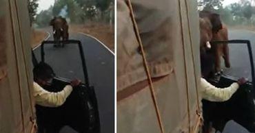 Разъяренный слон атаковал грузовик в индийском заповеднике. Фото: Point.md.