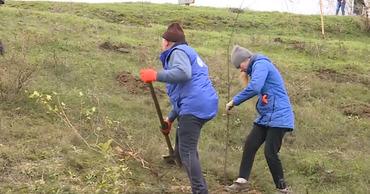 В селе Жеврены высадили две тысячи деревьев.