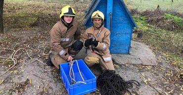 В Каушанах спасатели достали упавшую в колодец кошку