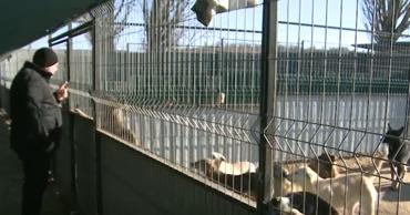 На расширение столичного приюта для собак потратят 900 тысяч леев.