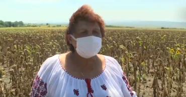 Нина Мовиляну из Унгенского района засеяла 300 гектаров пшеницы, кукурузы и подсолнуха.
