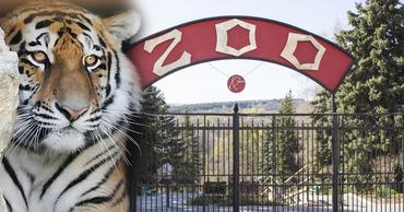 Умер сотрудник кишиневского зоопарка, на которого в конце января напал тигр.