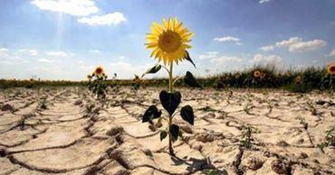 Из-за засухи и карантина молдавский экспорт снизился более чем на 10%.
