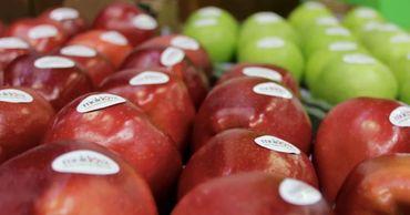 За последние три года число молдавских экспортеров фруктов в Россию удвоилось.