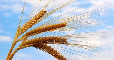 Правительство приняло решение об отпуске пшеницы из госрезервов