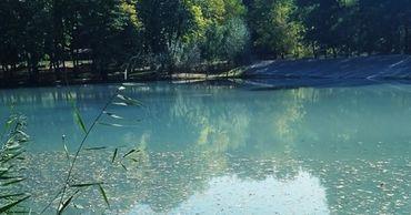 Экологическая катастрофа: в одном из столичных озер всплыла рыба.