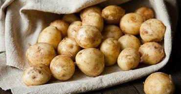 Молдавские производители картофеля жалуются, что им негде продавать свой урожай.