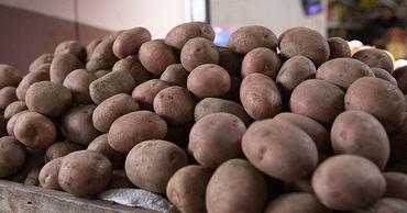 ANSA: 95% картофеля, ввозимого в Молдову, не соответствует требованиям.