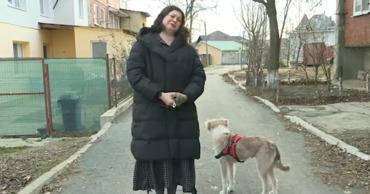 Всё больше жителей Молдовы решаются взять в семью бездомных животных.