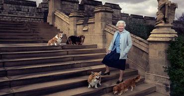У Елизаветы II появились два щенка корги.