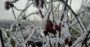 Зима на пороге: сказочные пейзажи запечатлели в Сорокском районе.