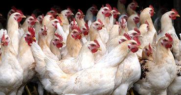 Молдова возобновляет импорт яиц и мяса птицы из Украины после запрета