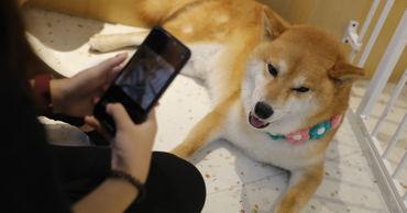 Собака из Петербурга благодаря трюкам стала звездой интернета.