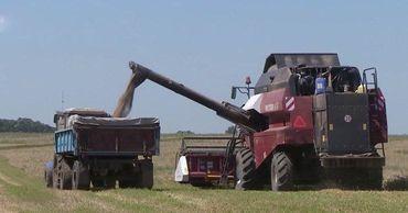 Озимую пшеницу в Молдове соберут вполовину меньше, чем планировали.