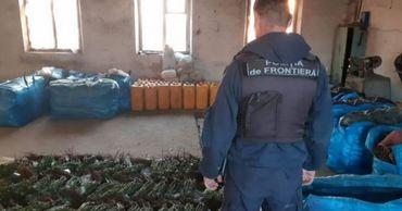 Пресечена попытка незаконно перевезти 6000 саженцев роз через границу.