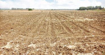 Молдавские аграрии сообщают о колоссальных потерях урожая. Фото: btv.md.