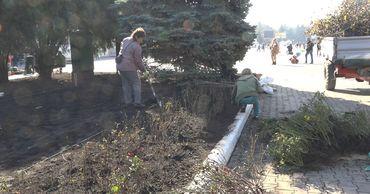 В Бельцах высадят около 8 тысяч кустов роз. Фото: btv.md.